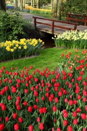 flori, blumen, parc, park, lalele, tulipan, virag, flowers, flower, pod, brucke, hid, landscape
